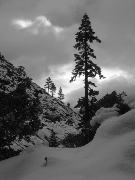 Yosemite & San Diego May 2011 139