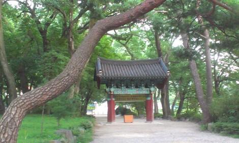 Korean tree