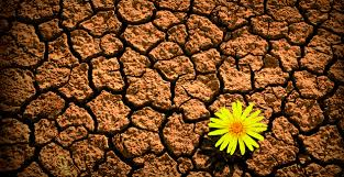 resilience-flower-in-desert